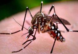 d23426665 na komari
